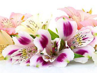 Blumen als Überraschung