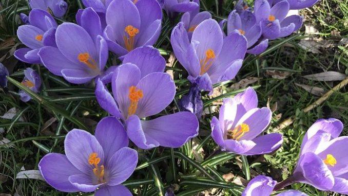 Geschenkideen zum Frühlingsanfang